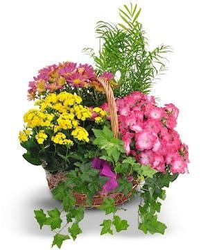 A special springtime basket!