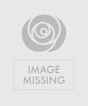 Multi-colored Premium Roses in a glass vase
