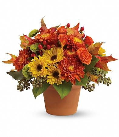 Sugar Maples - Conklyn's Nationwide Flowers