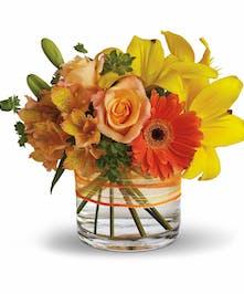 Sunny Siesta - Conklyn's Flowers