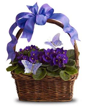 A basket of African Violets